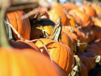 pumpkin pie challenge