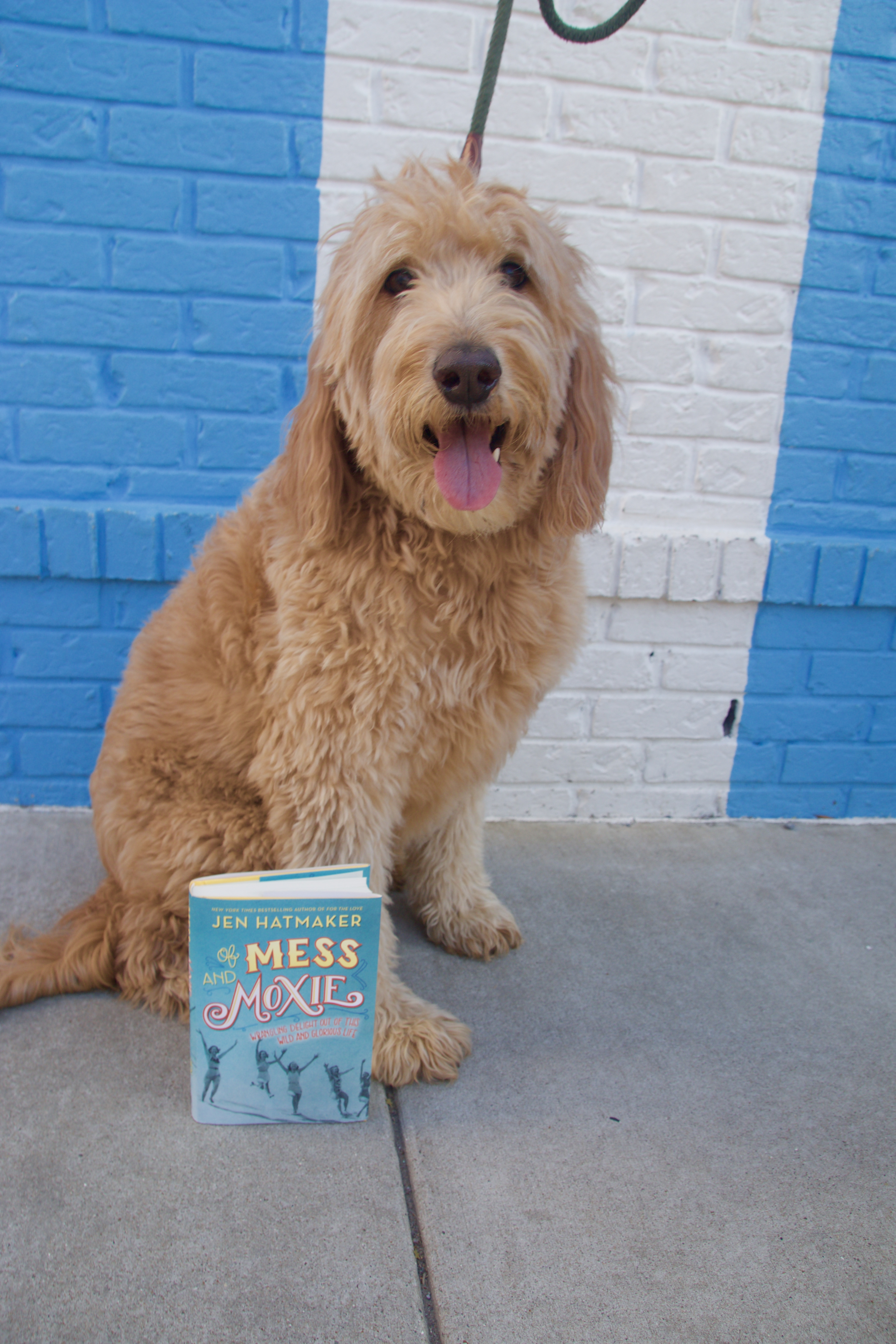 Puppy reviews, puppy book reviews, books with puppies