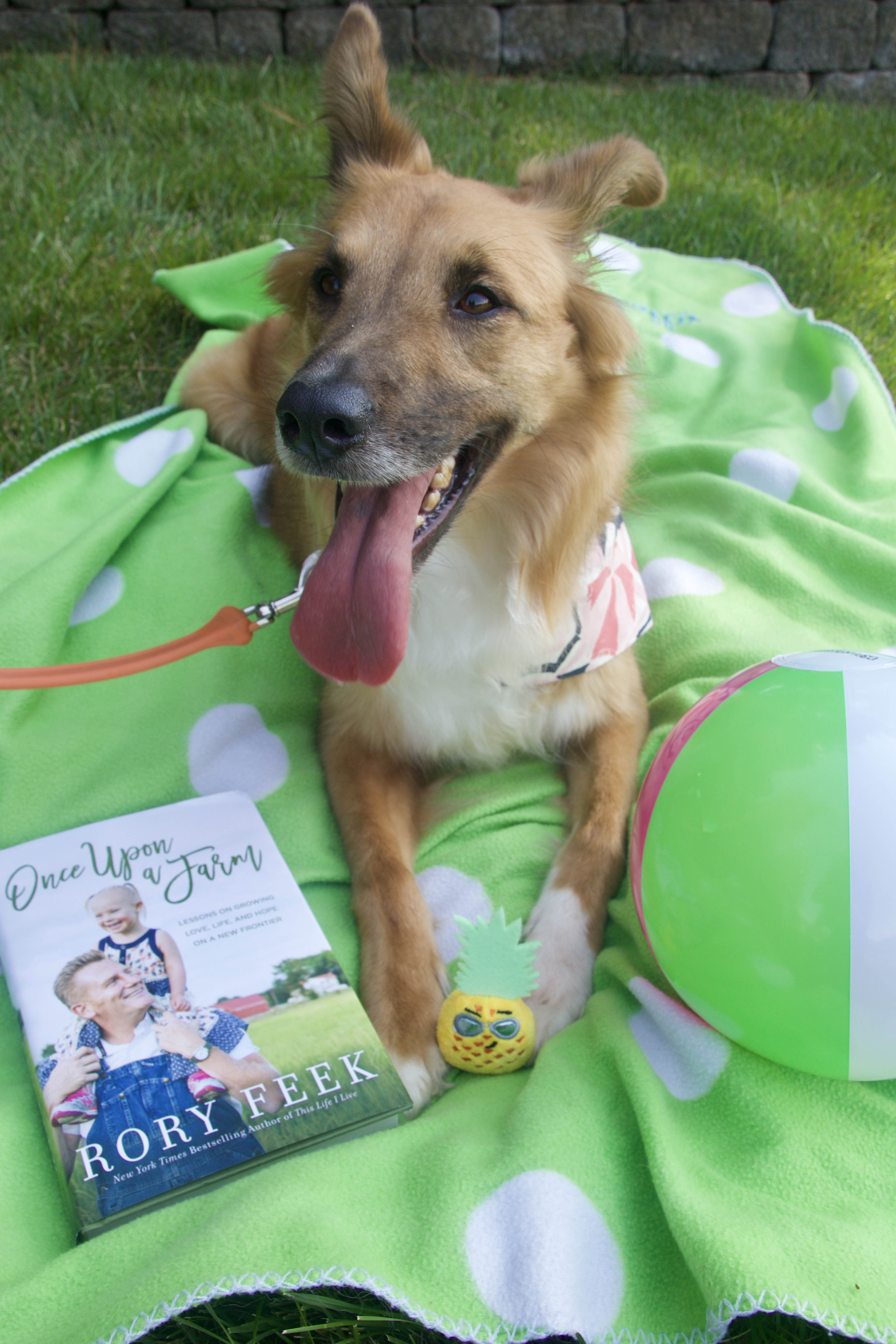 dog days of summer, dog with Rory feek, once upon a farm